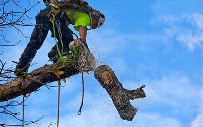 How A Tree Service Company Works