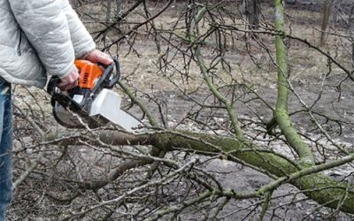Important Guideline about tree care from tree specialists